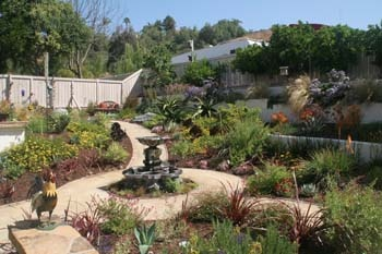 Six Steps to a California Friendly Garden